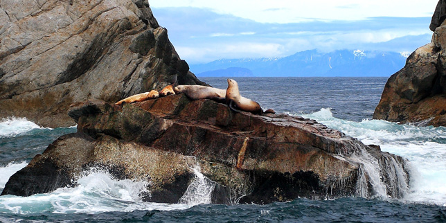 Alaska Boat Tours Seward