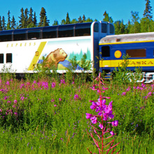 Wilderness Express with fireweed near Fairbanks.